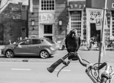 Citybird (1 van 1)