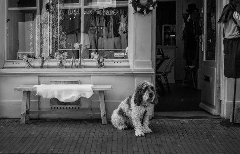 hond voor winkel (1 van 1)