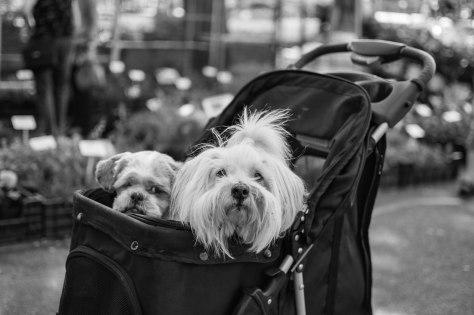 hondjes in zwart wit (1 van 1)