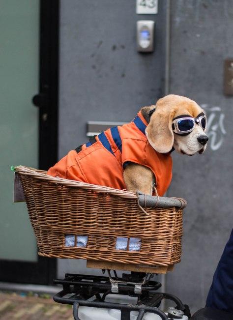 hond-met-bril-kleur-1-van-1